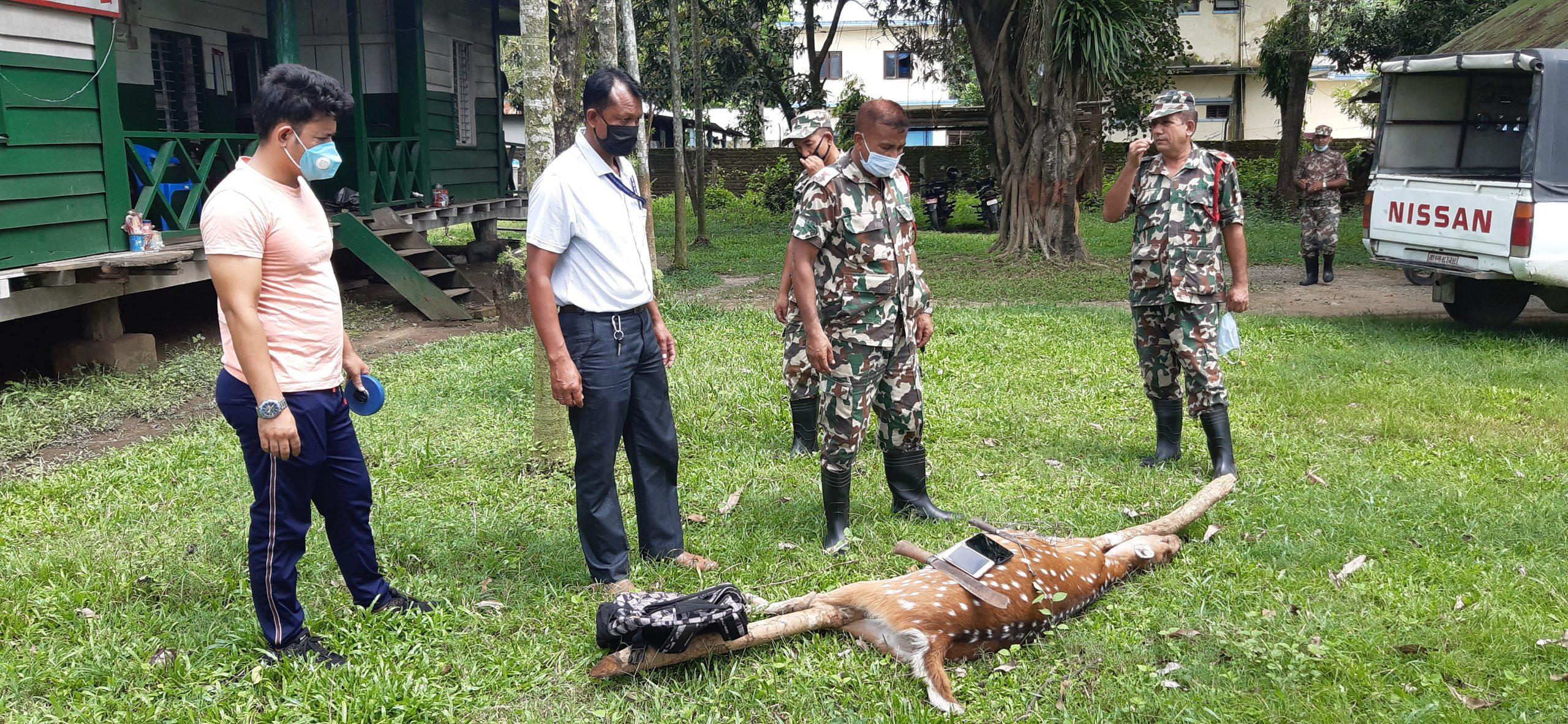 कानेपोखरी–पथरी क्षेत्रको वनजंगलमा वन्यजन्तु चोरी शिकारी बढ्दै
